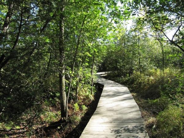 Pour la biodiversité, le chemin importe autant que l'objectif