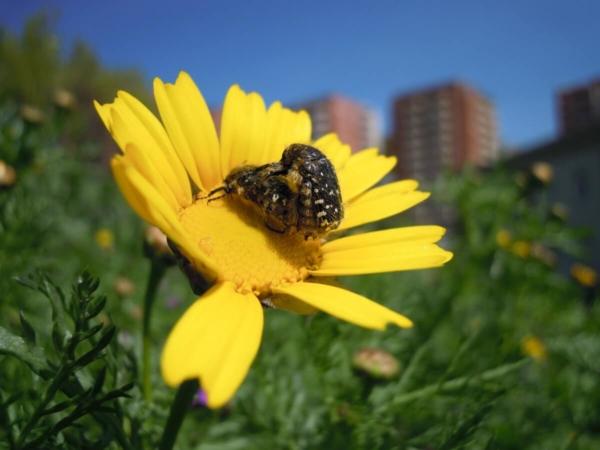 Biodiversité et insectes en ville: c'est possible !