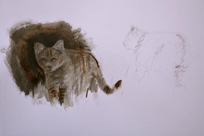 Croquis d'un chat forestier par Bruce Ronchi