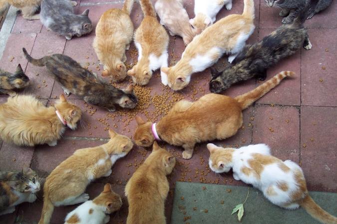 Nombreux et nourris, les chats domestiques peuvent faire pencher la balance du mauvais côté pour la faune sauvage
