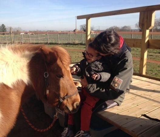 Scéance d'équithérapie avec un jeune garçon et un poney