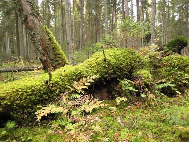 Forêt en libre évolution, trésor biologique