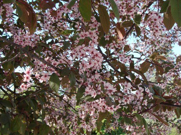 Haie champêtre chez un particulier... Vive la biodiversité !