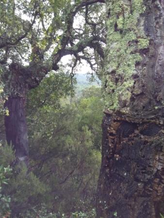 Lichen en arboretum