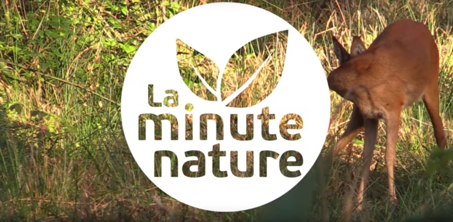 Logo de la Minute Nature