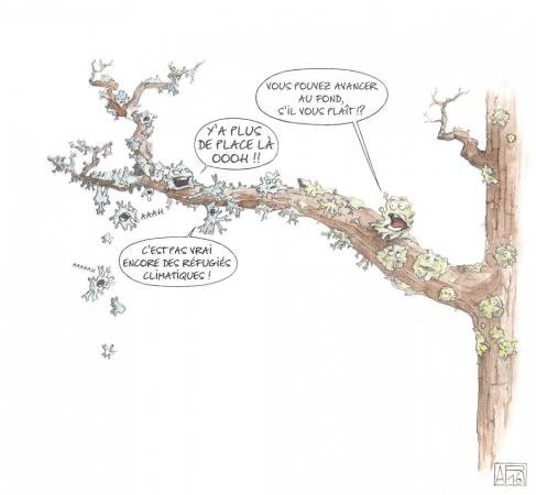Illustration sur les lichens