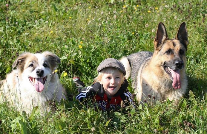 Un jeune enfant jouant avec 2  chiens