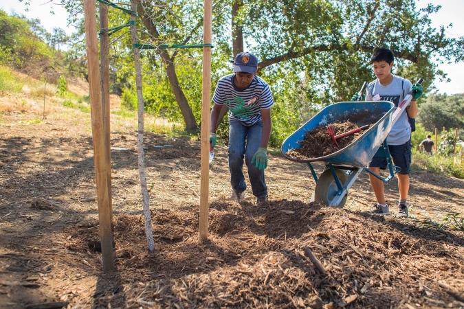 Paillage avec BRF : Enfants en train de pailler un jeune arbre