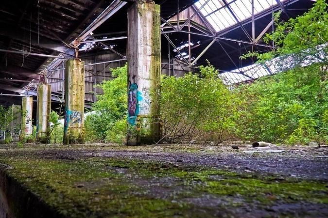 Retour de la végétation dans une friche industrielle