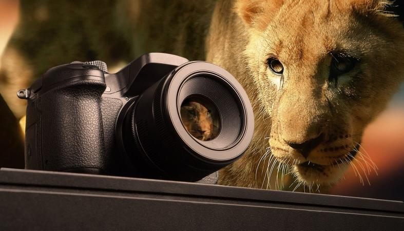 Les meilleurs blog de photographie animale