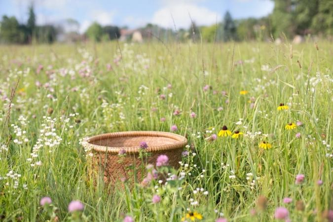 Cortège floristique de plaine et panier de récolte