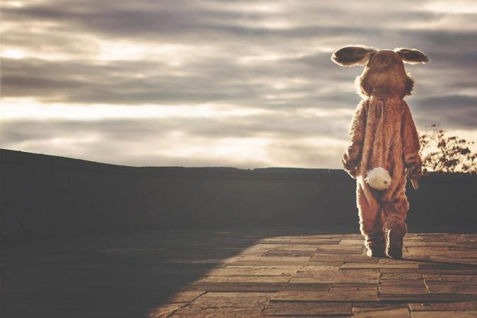 Vivre avec des lapins : quels effets sur le long terme ?